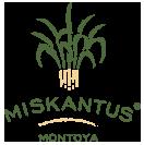 Miskantus Montoya